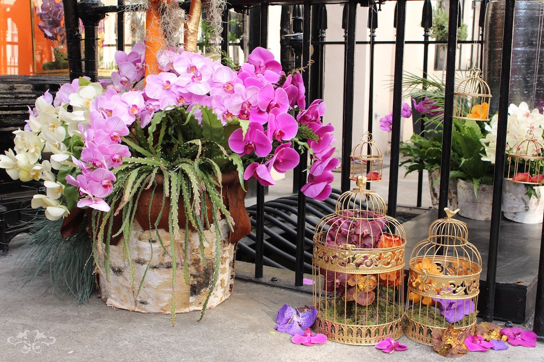 Orchid displays by Neill Strain.jpg
