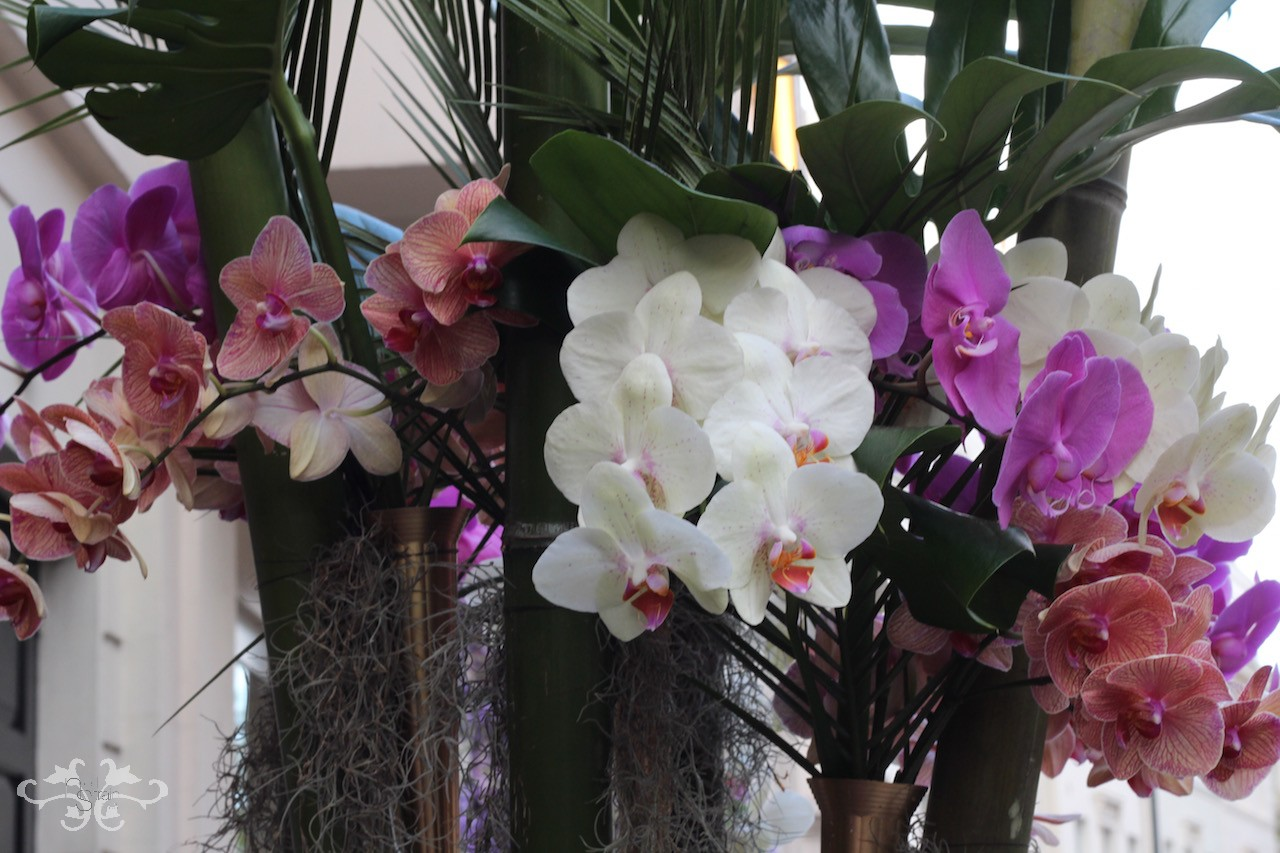 For the love of Orchids by Neill Strain