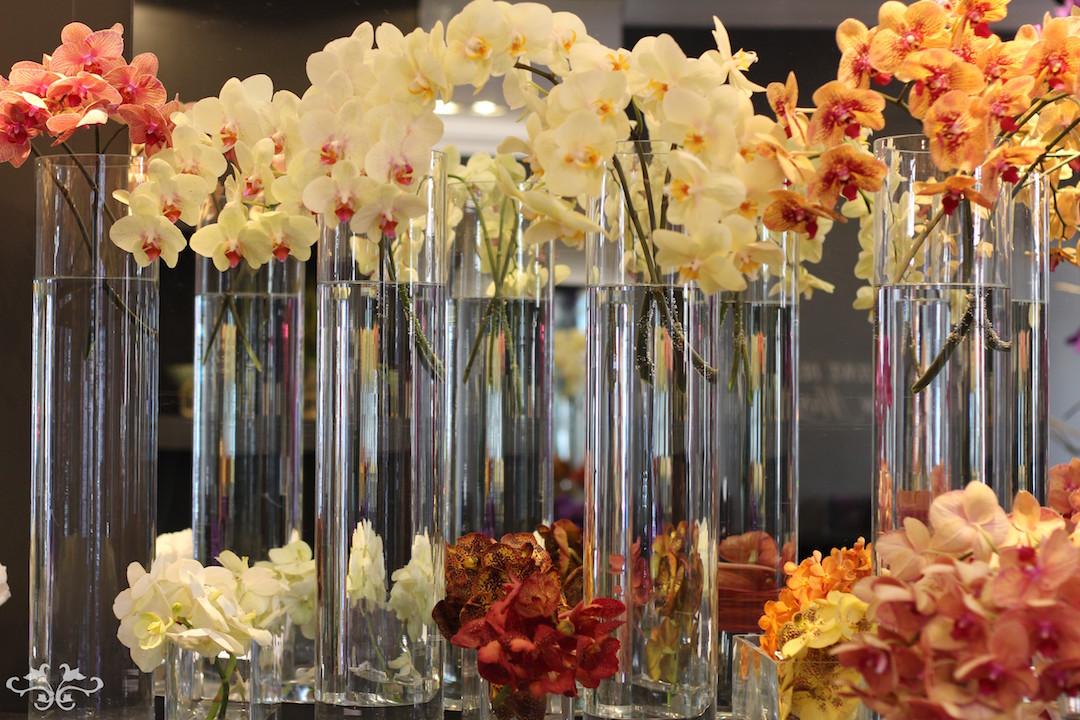 Phalaenopsis and Vanda Orchids at Neill Strain