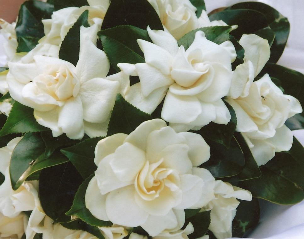 bruidsboeket gardenia (1).jpg