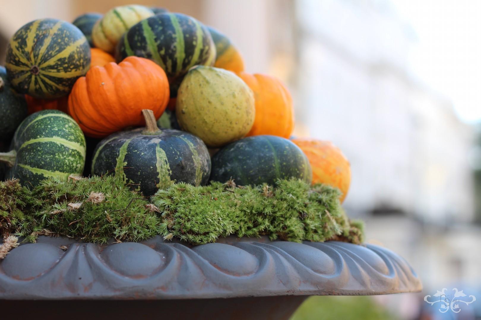 Gourds for Autumn at Neill Strain Belgravia