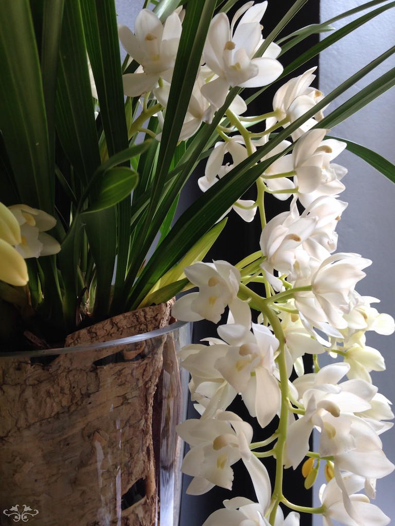 Trailing Cymbidium Orchids in beautiful containers at Neill Strain Floral Couture, available in white and shades of purple and plum.