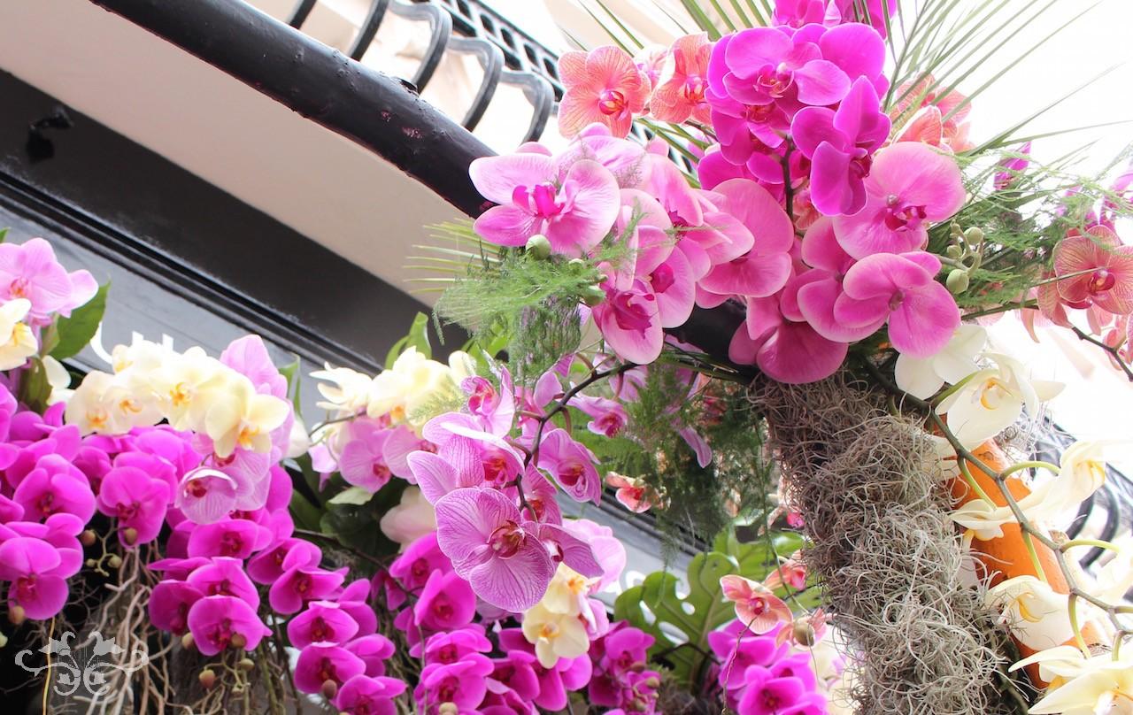 Best+Orchids+at+Neill+Strain+Belgravia+Knightsbridge.jpeg