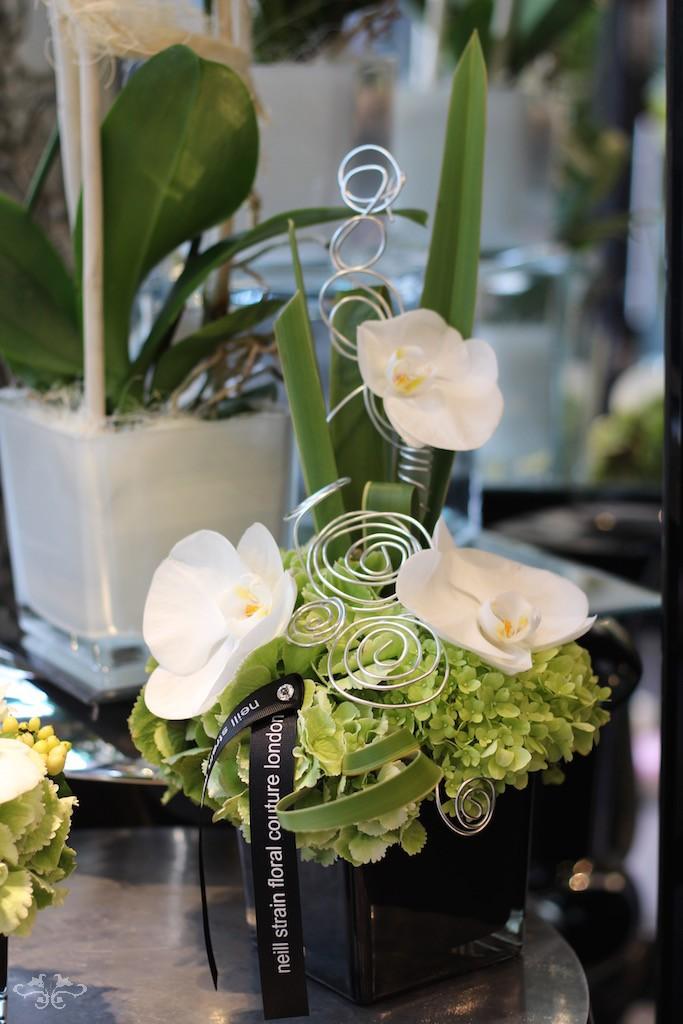 Neill Strain orchids.jpg