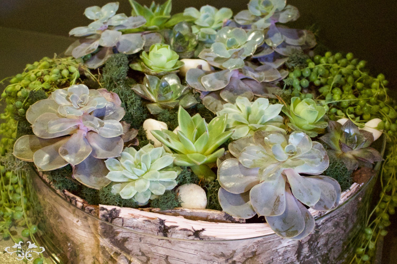 Succulent design by Neill Strain Belgravia
