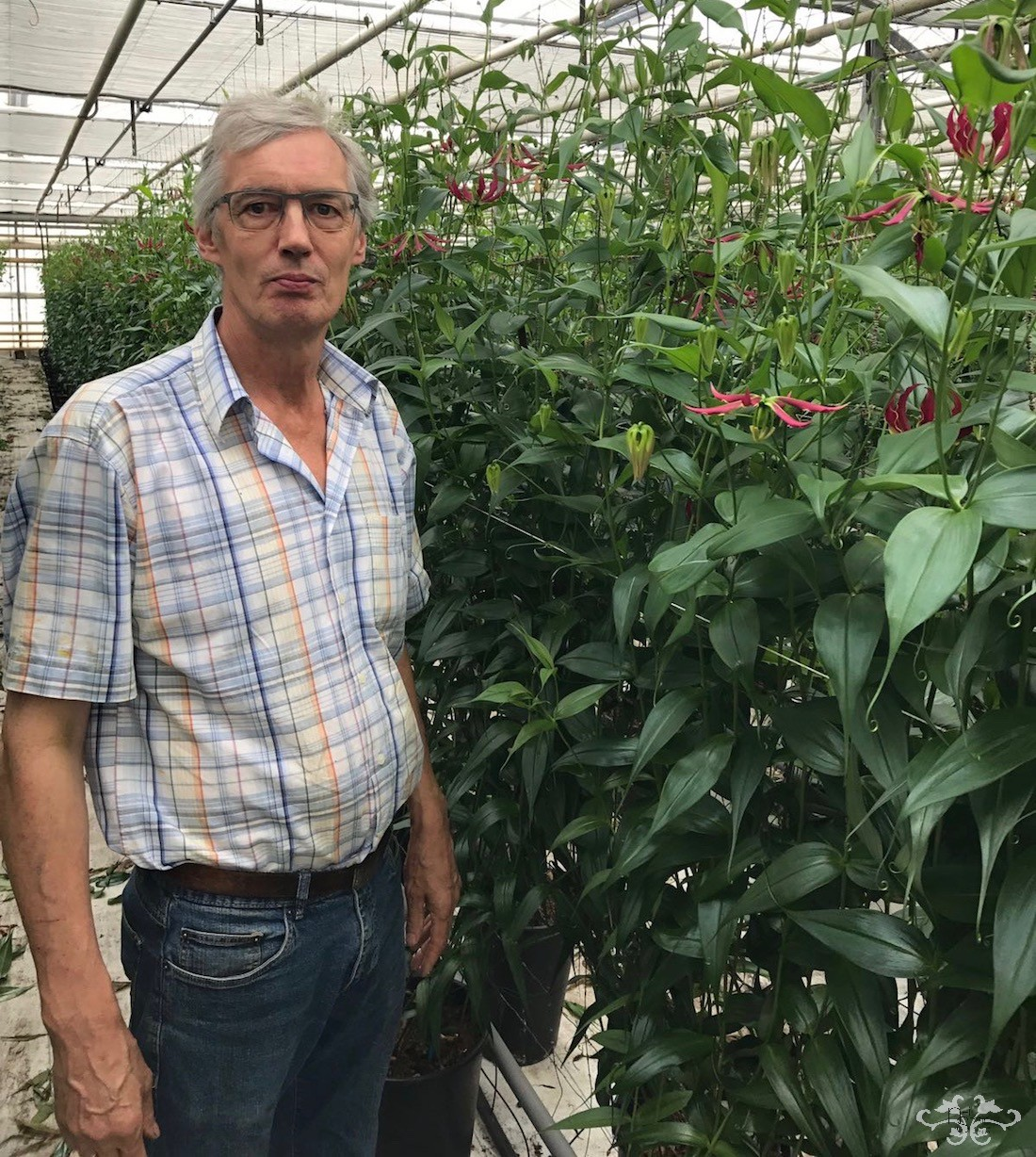 Bennie Ruizendaal in his nursery dedicated solely to Gloriosa in north Holland