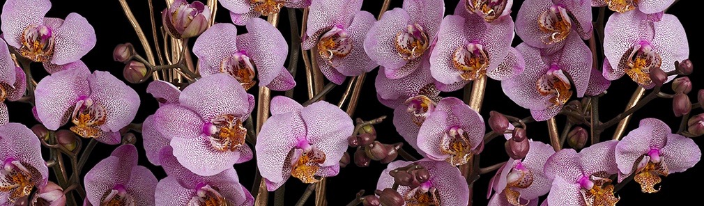 Neill Strain Floral Couture Orchid planter care guide