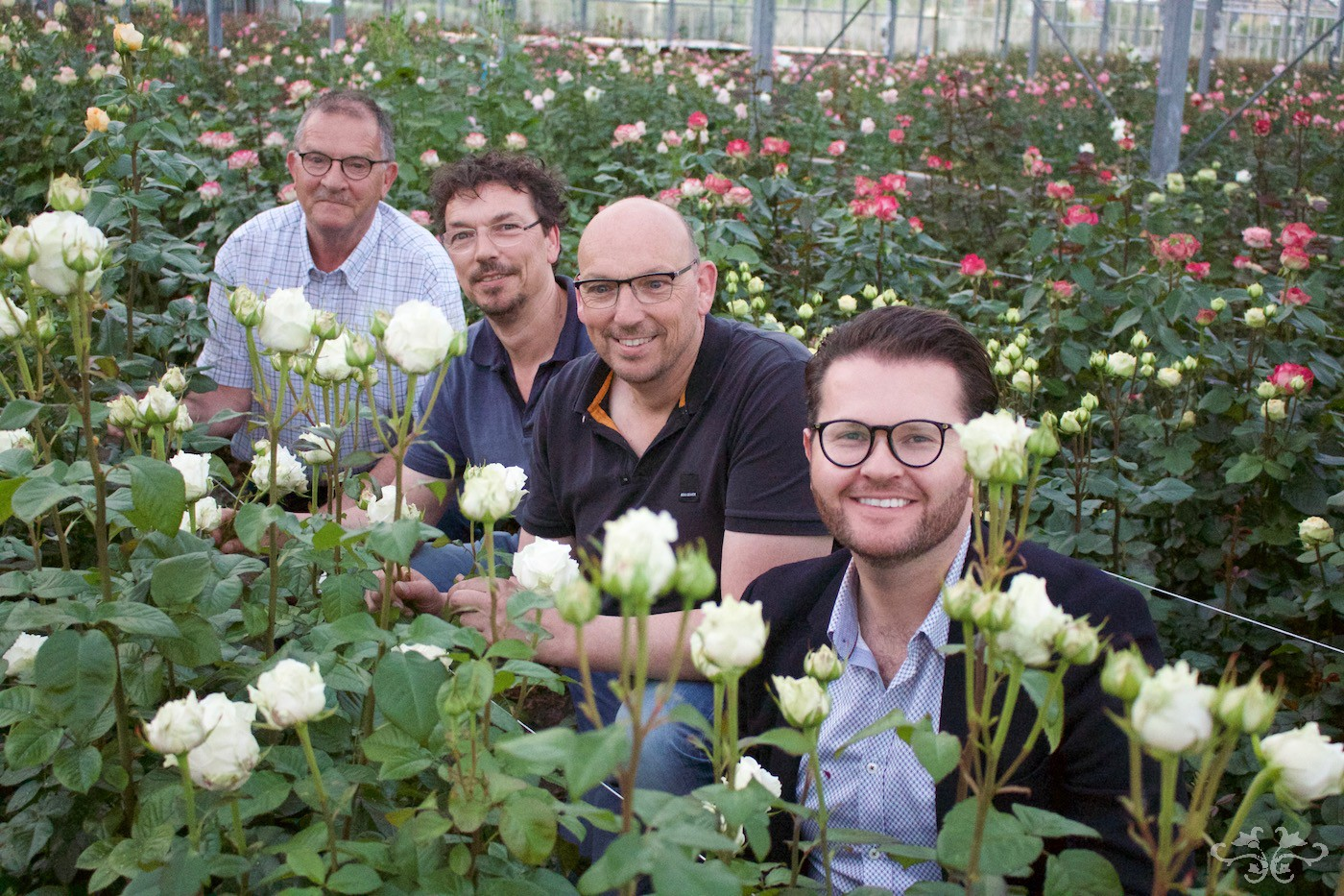 Neill Strain with Marc and Ed Sassen and Loek Van Eeden amidst the Belgravia Roses at the VIP glasshouse