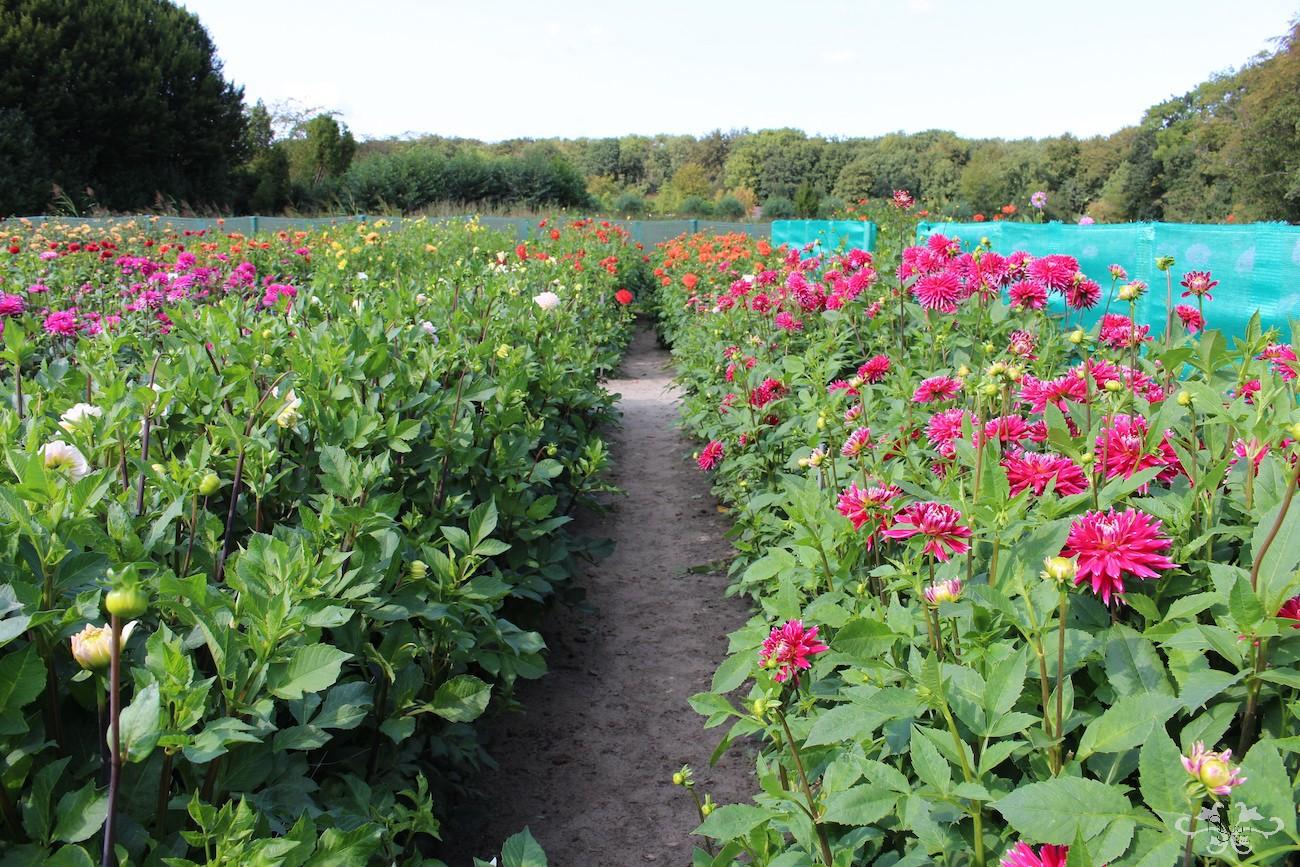 Geerlings Dahlias Garden Showroom in Heemstede
