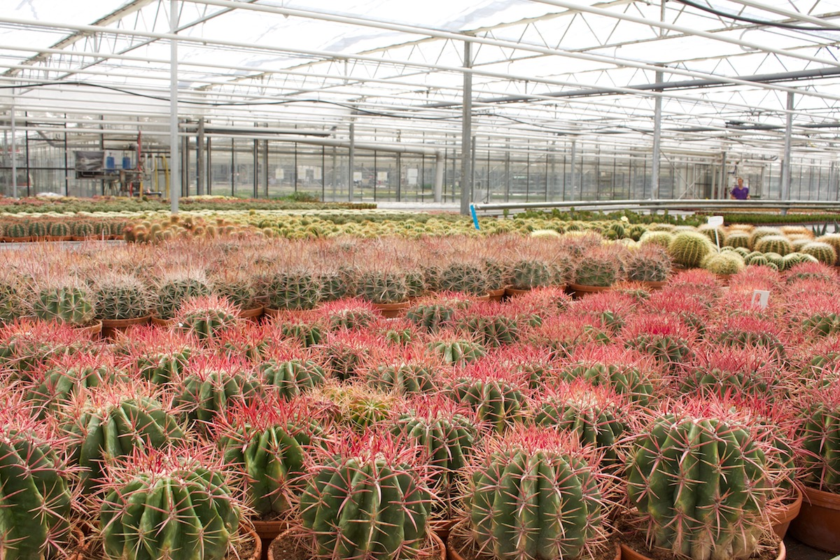 Cacti grower