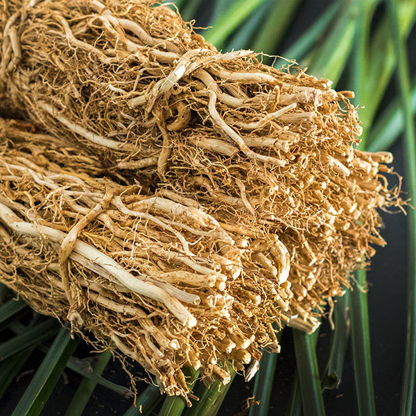 Vetiver Grass Roots.jpg