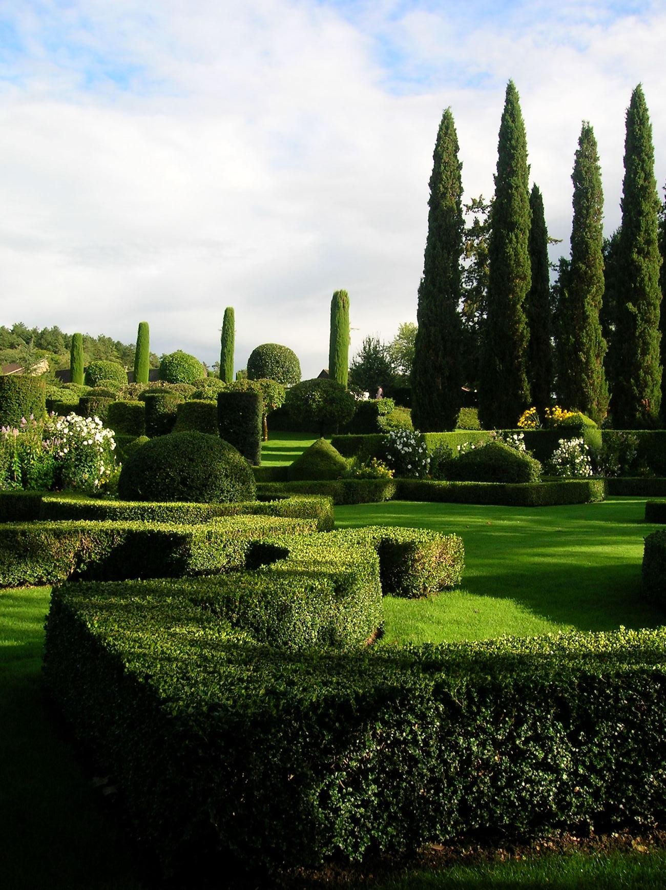 Cyprus Trees Provence.JPG