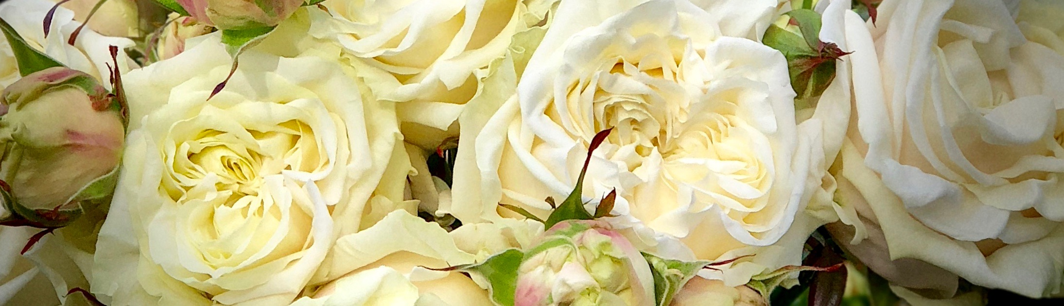 Luxury Roses by Neill Strain Floral Couture