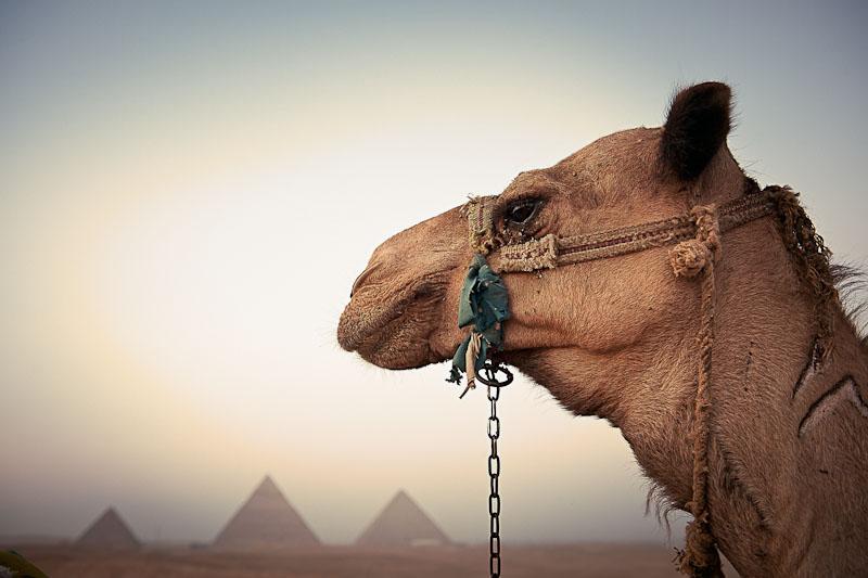 egypt18.jpg