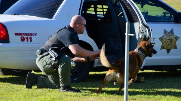 """El Dorado County K9 """"Bakus"""" is deployed during a training demonstration at the PCSC field. Photo: Julie Baldwin"""