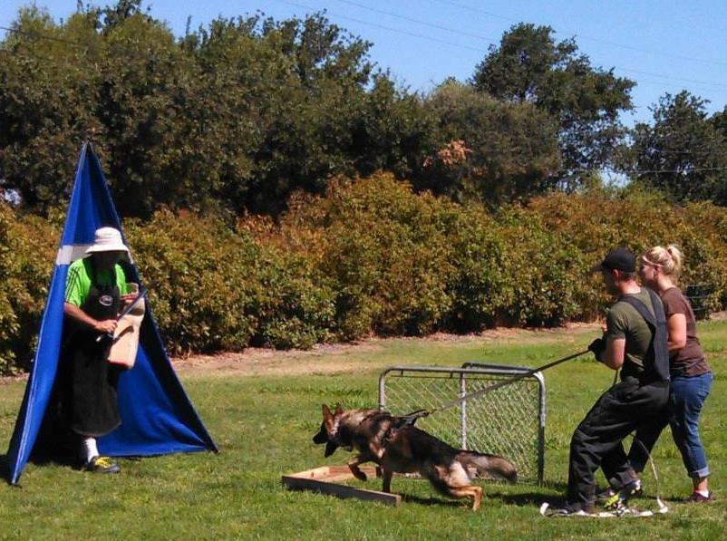 Training is a collaborative endeavor involving the training director, helper, handler, and other club members.