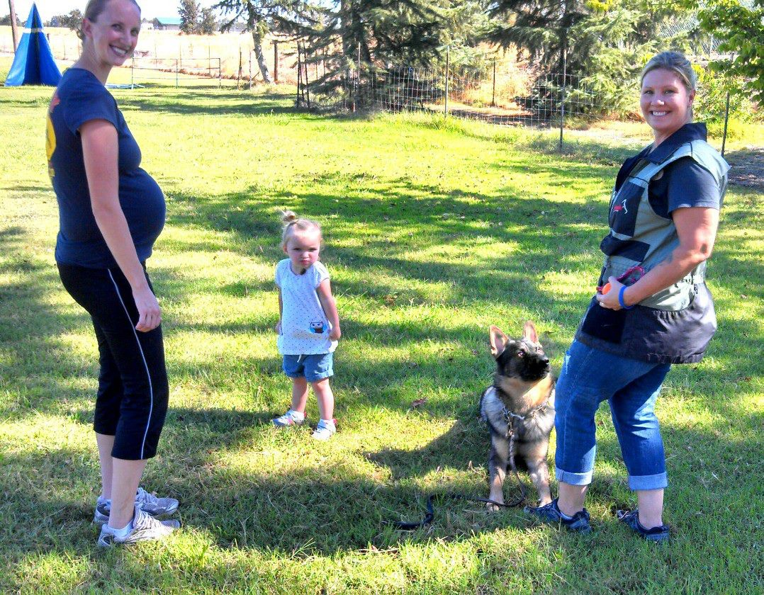 "IPO provides opportunities for dedicated pet owners to put excellent, sophisticated training on their dogs and to compete for recognition of their hard work, handling ability, and dog's genetic abilities. Photo: Leah with ""Jacko"" working on their long down under distraction with Elise and Makena."