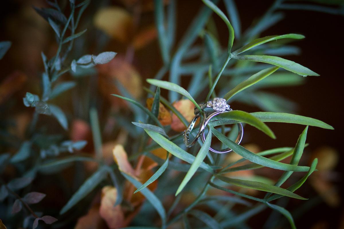 gold-hill-gardens-newcastle-ca-wedding-photographer.jpg