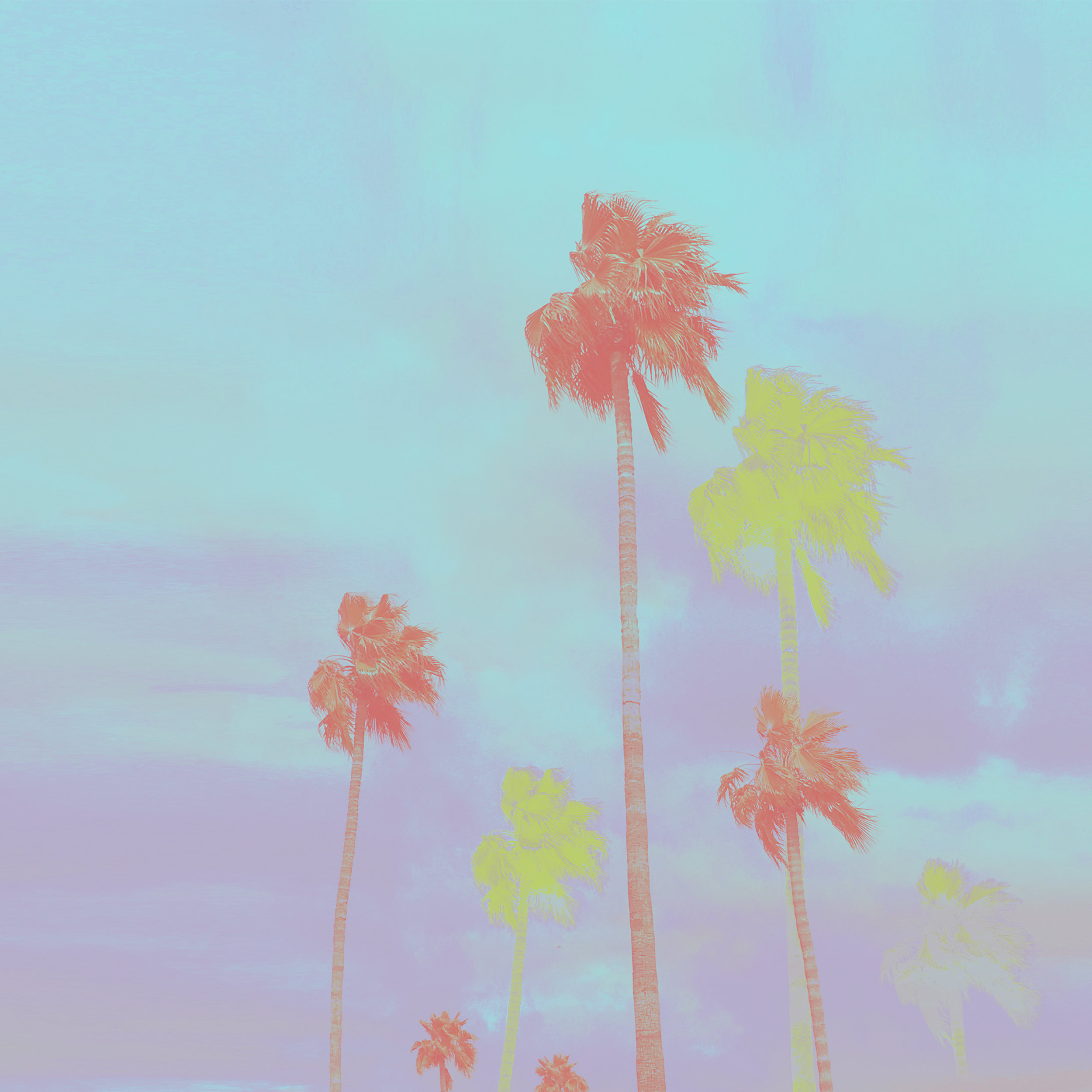 MulitColor_PalmTrees.jpg