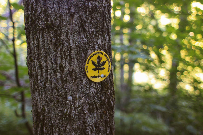 Short nature trail around the lake