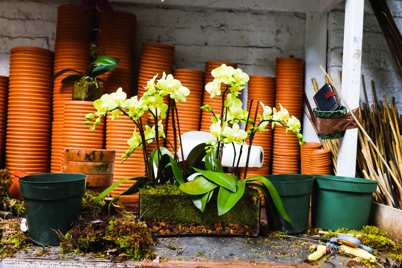 brodo_flower-market_160312_006.jpg