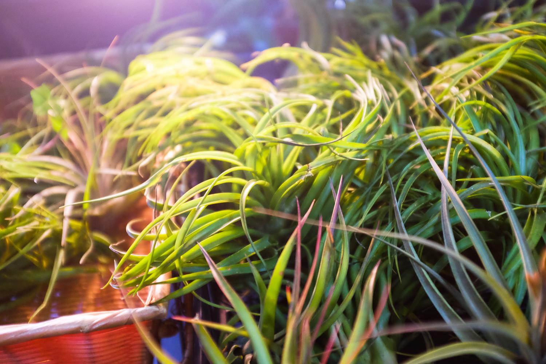 brodo_flower-market_160312_012.jpg