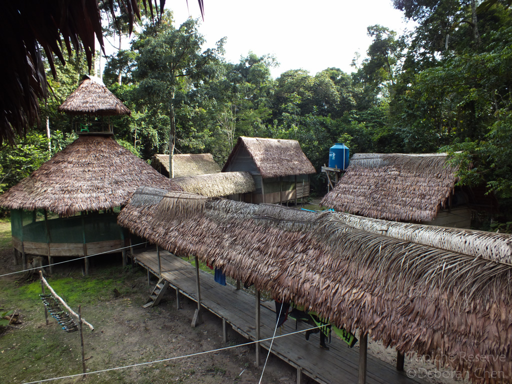 Handcrafted Irapay palm leaf roofing