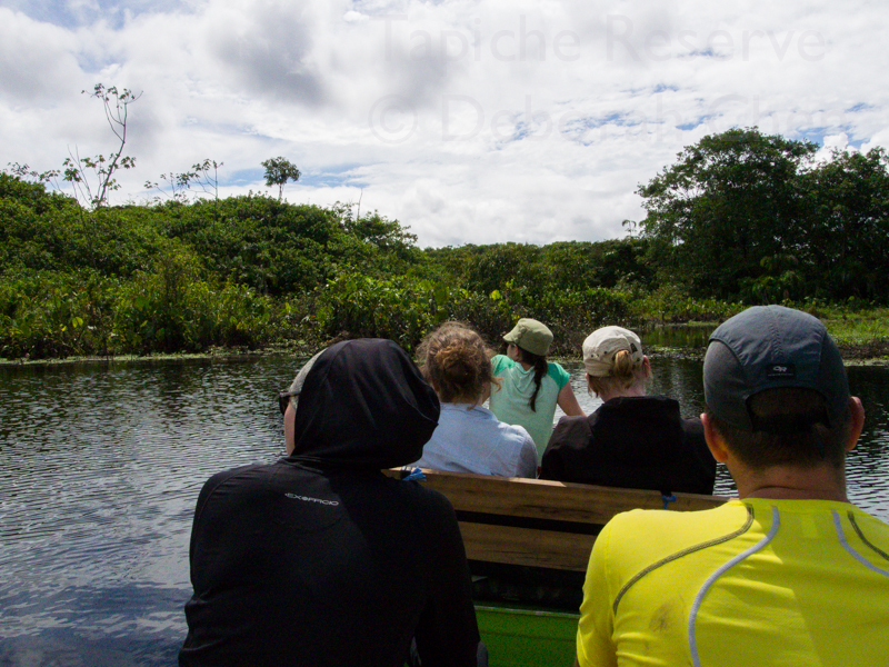 Approaching the Agami Heron nesting area at Tapiche Reserve, Peru