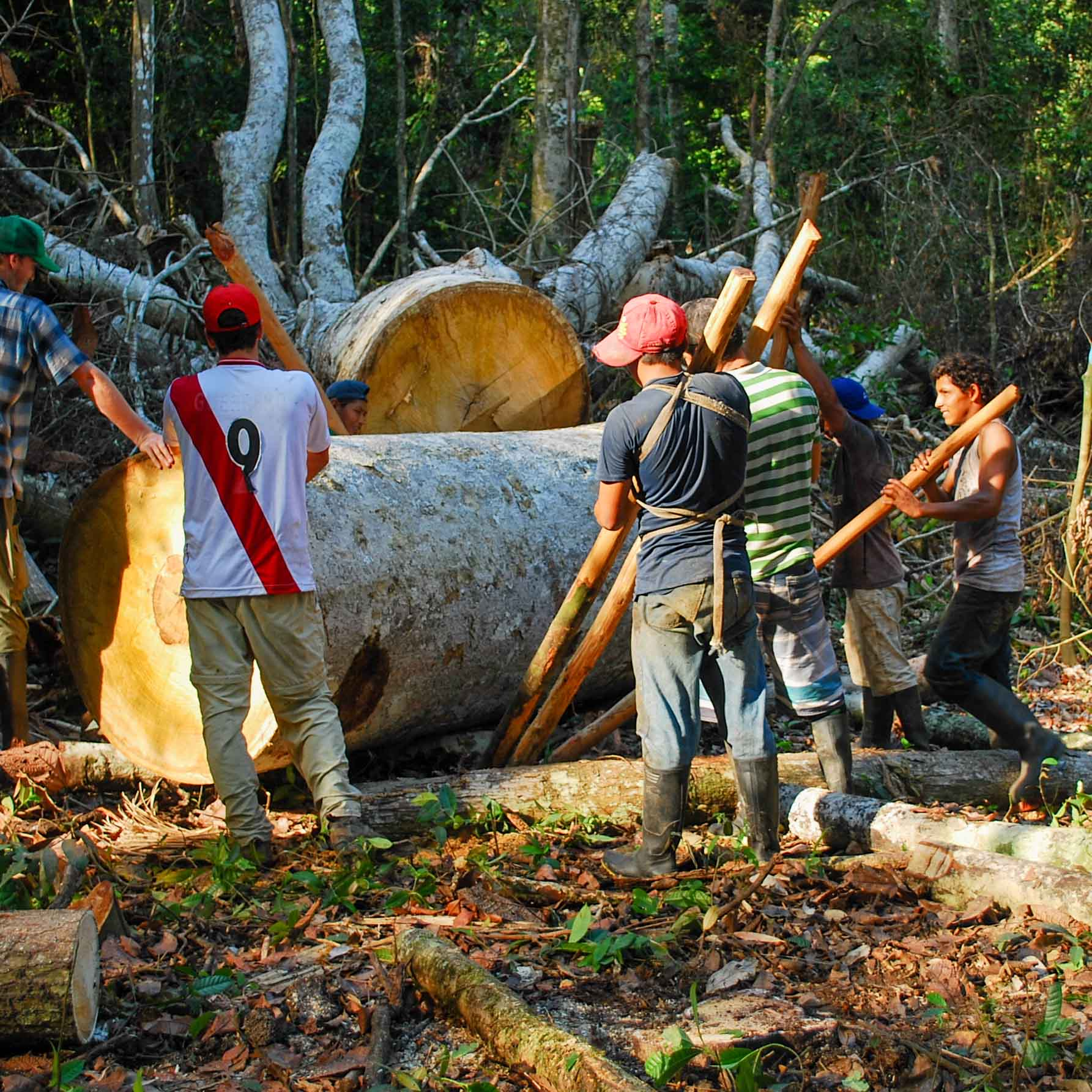 Logging involves backbreaking manual labor in unregulated conditions for little to no pay or even debt