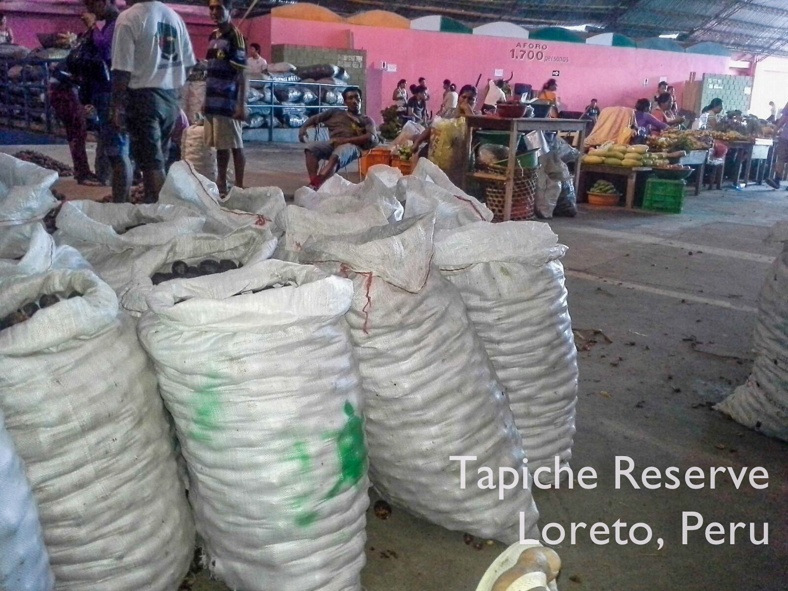 Aguaje fruits sustainably harvested from Tapiche Reserve being sold at the Mercado de Productores in Iquitos, Peru