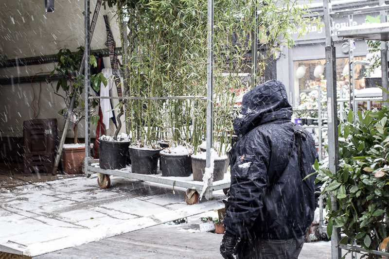 Wrapping up to load tropical plants in the snow, only in London!