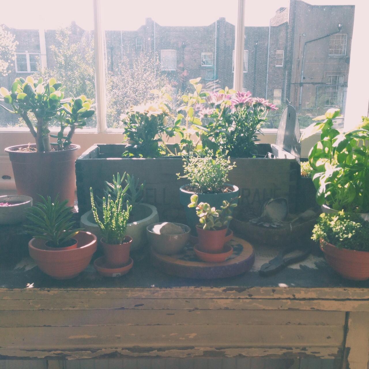 The kitchen window succulent display