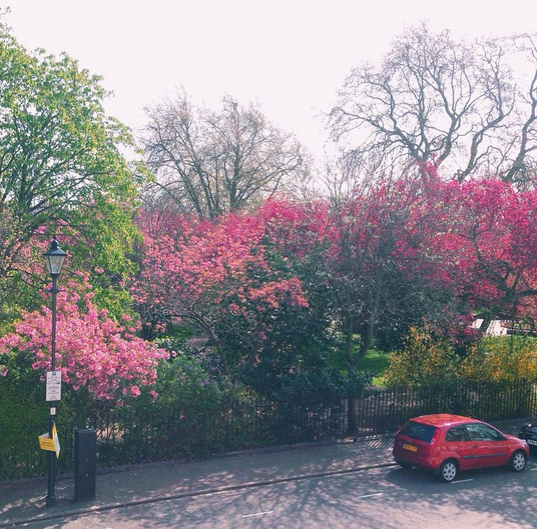 The view from the studio onto Thornhill Square.