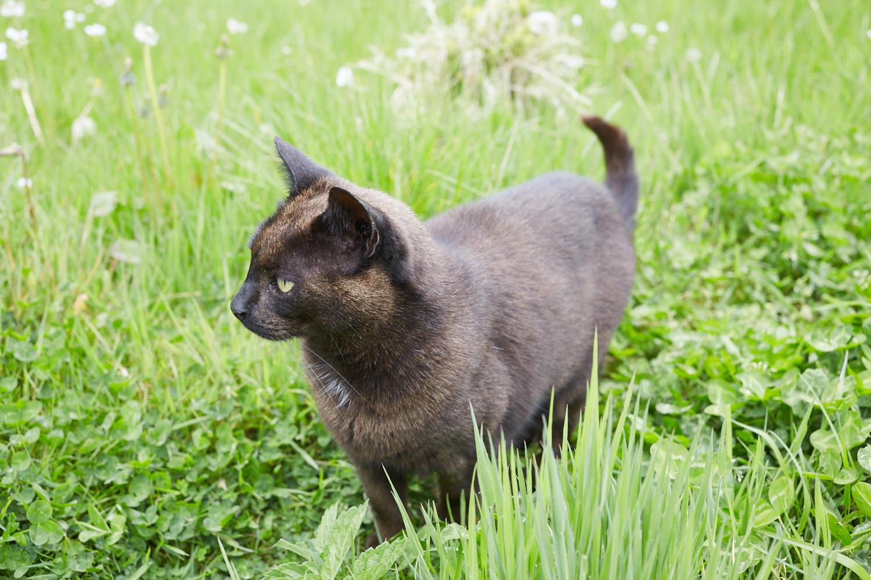 Mrs Jones the resident cottage cat
