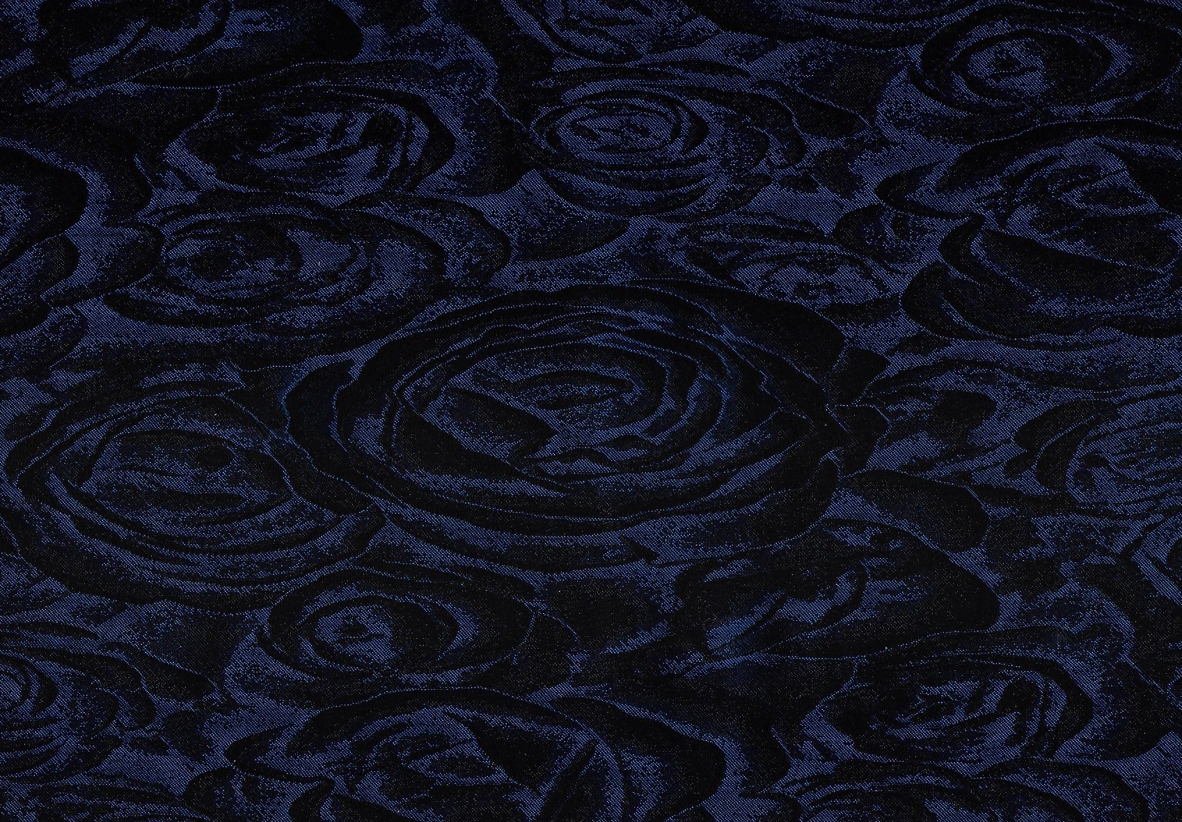 fran rose blue.jpg