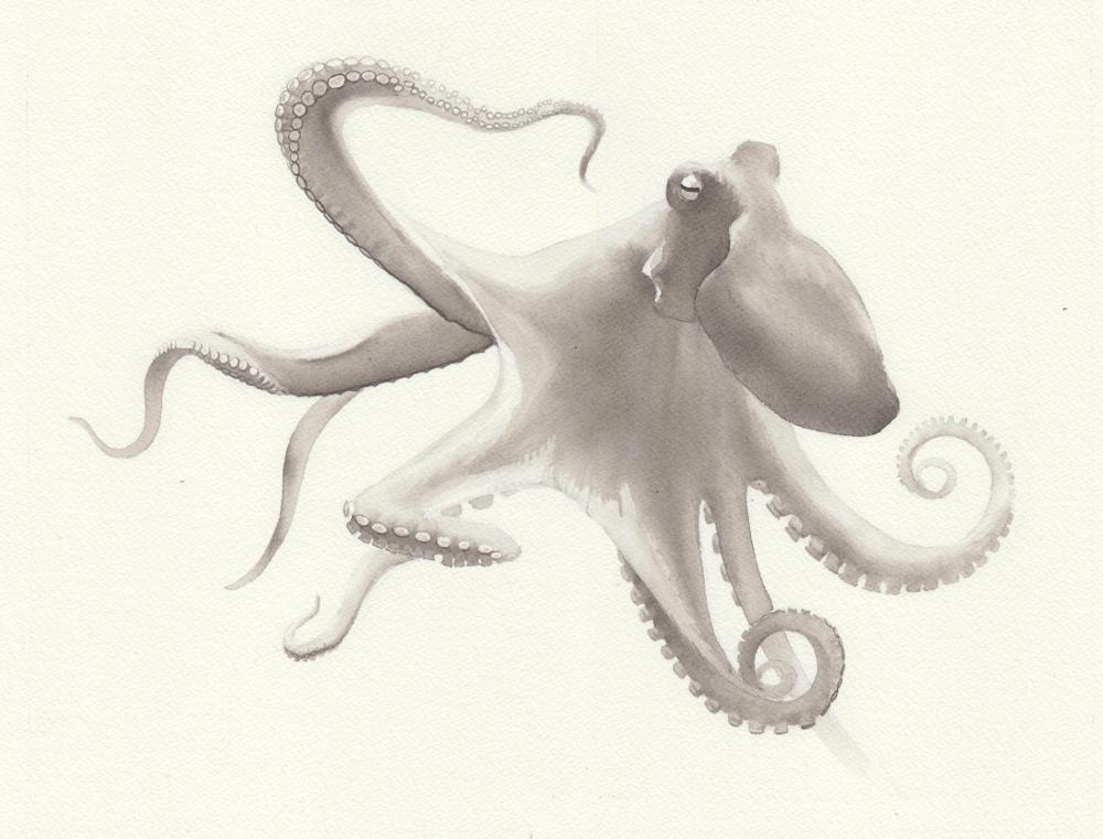 octopus1-reduced.jpeg