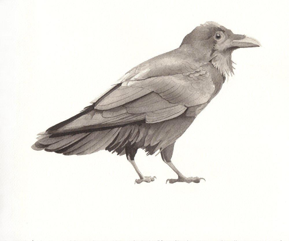 bird3a-reduced.jpeg
