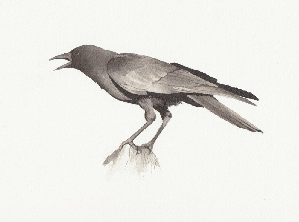 bird4-reduced.jpeg