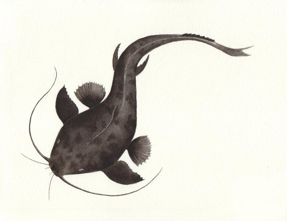 Catfish1 - reduced.jpeg