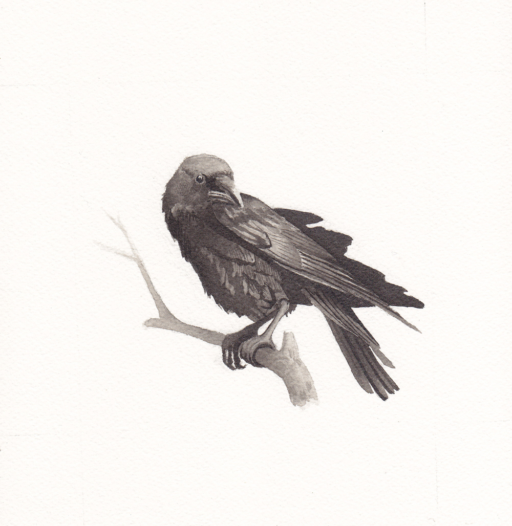 Crow-reduced.jpg