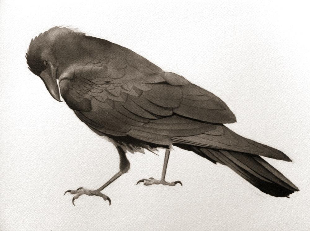 quiet crow.jpg