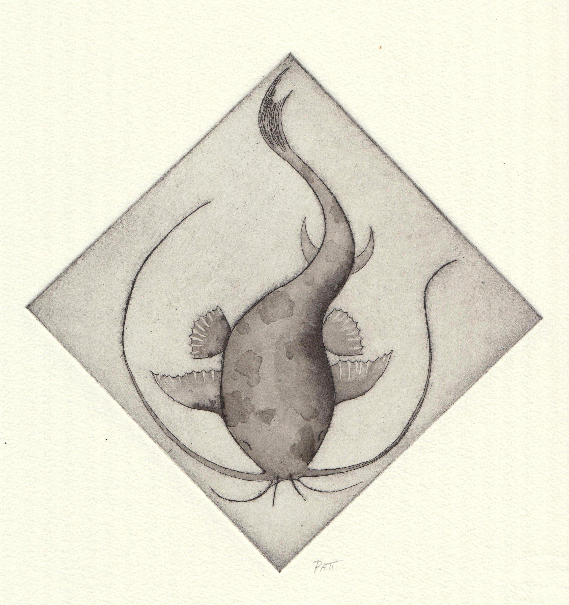 Catfish 1 - hand tinted etching - 1of1.jpg.jpeg