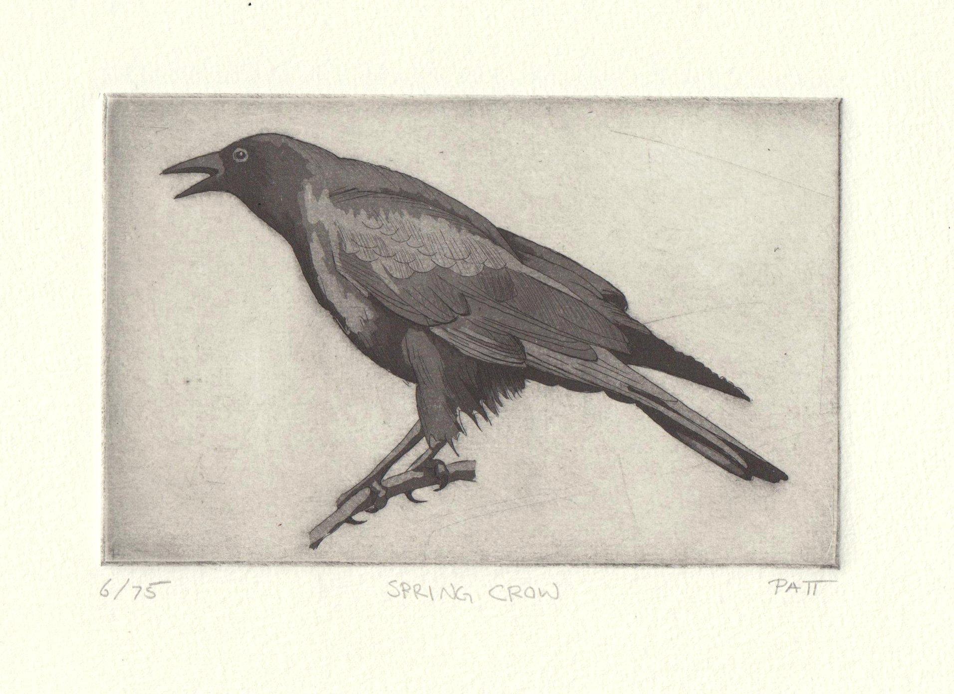 Summer Crow - hand tinted on hannemuelle - 6of75.jpg.jpeg