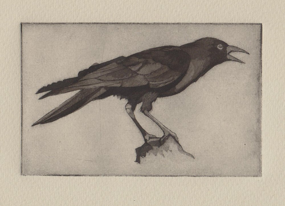 Winter Crow - hand tinted 1 of 15 - reduced.jpeg