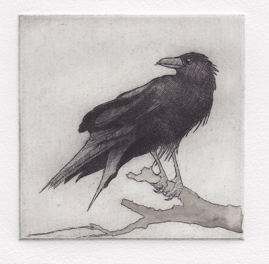 Patt_Annie_10_Paranoid Raven.jpg