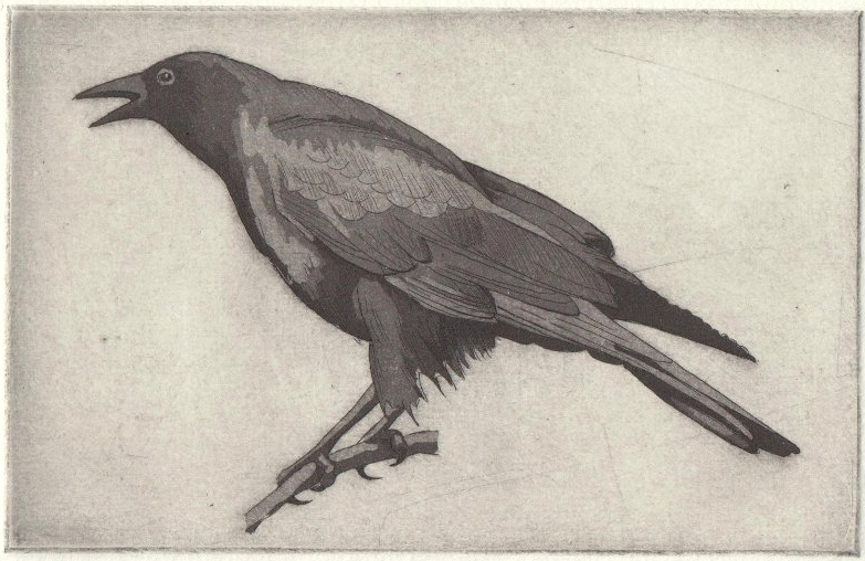 Summer Crow