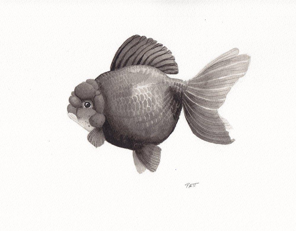 Fish6 small.jpg