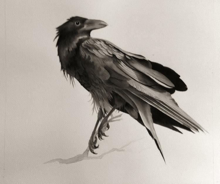 paranoid crow.jpg