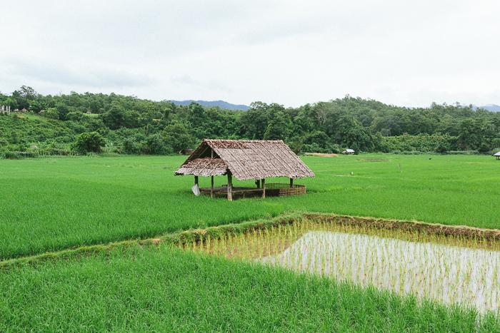 mae-hong-son-loop-thailand-0379.jpg