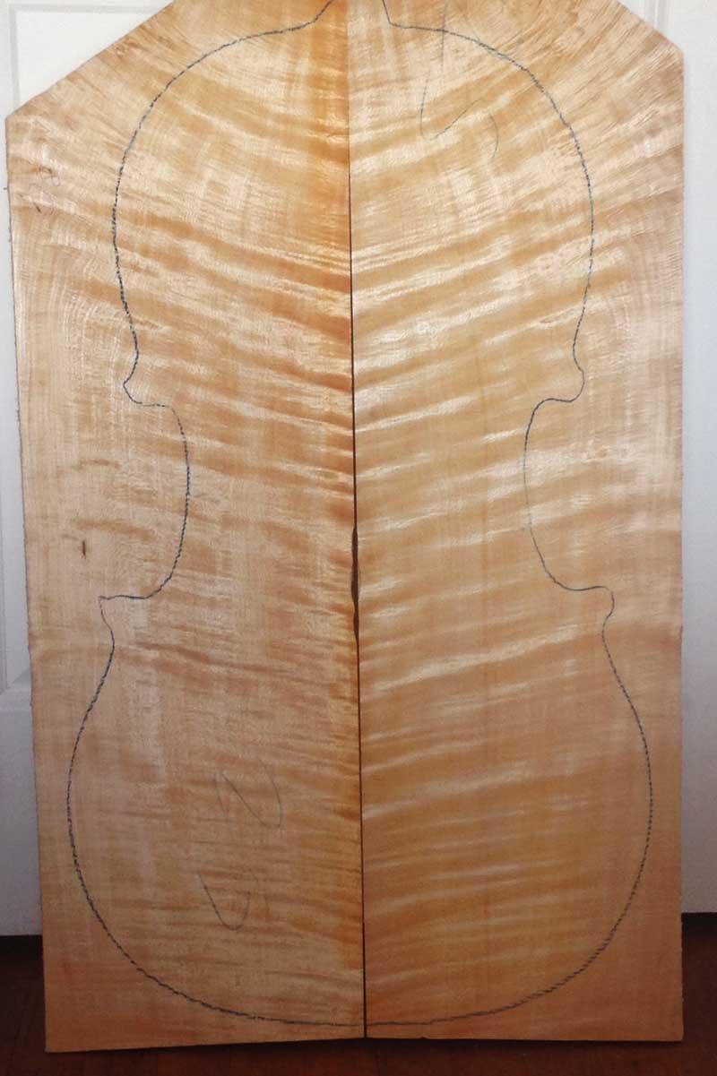 A spectular maple cello back.